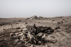 martinez_desertification