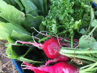 ハーブと野菜たっぷり料理教室6月の募集