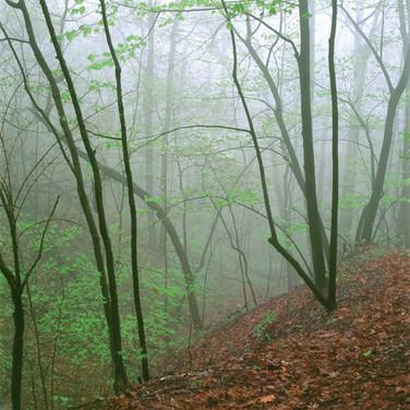 Ravine In Fog