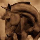 Horse #23