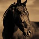 Horse #171
