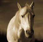 Horse #22