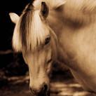 Horse #80