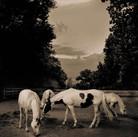 Horse #40