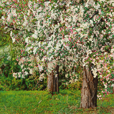 Thicket No.39 Crabapples