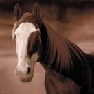 Horse #18
