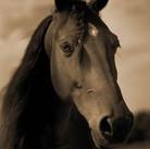 Horse #173