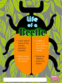 Life of a beetle.jpeg
