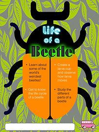 Life of a beetle.jpeg
