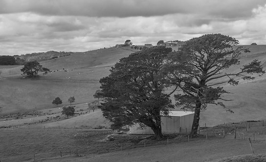 Farm Pines