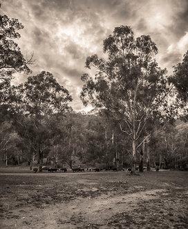 Sheepyard Flat