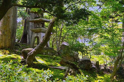 Japan Garden mini tree