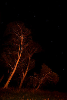 Trees by campfire