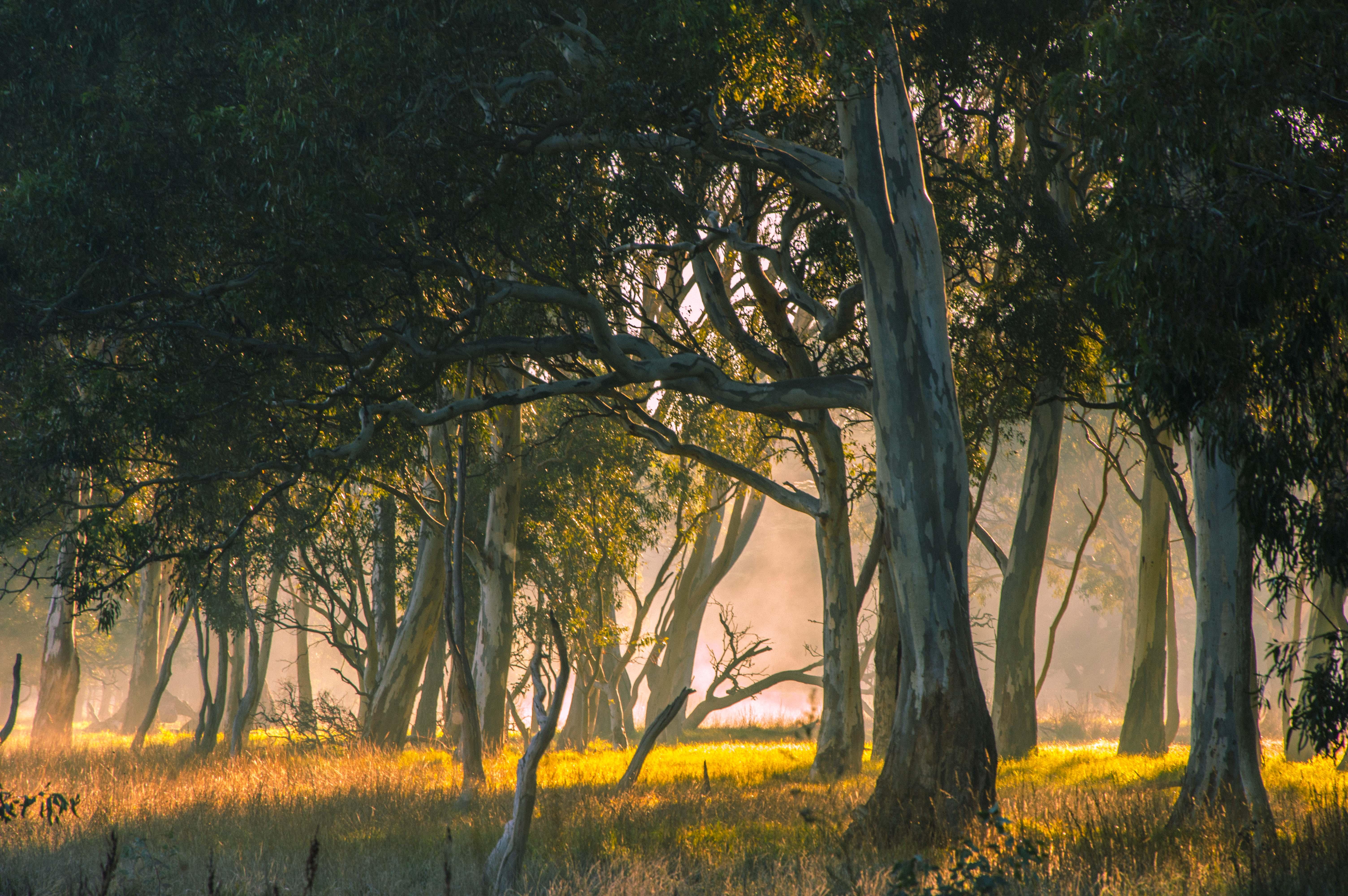 Morning walk trees