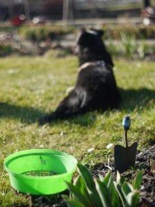 gardening-1331201-639x852