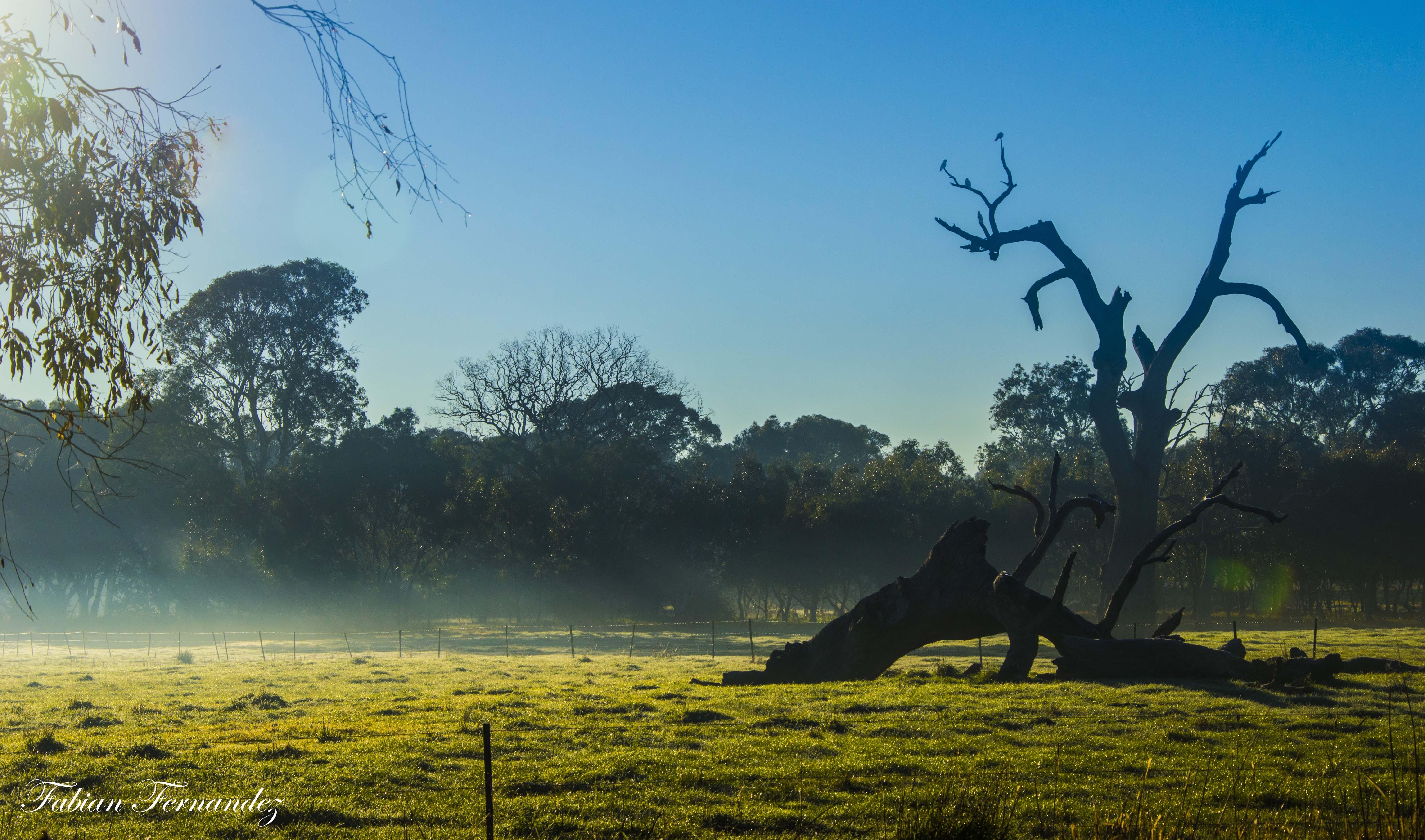 Morning walk trees 3 edited_1_flickr