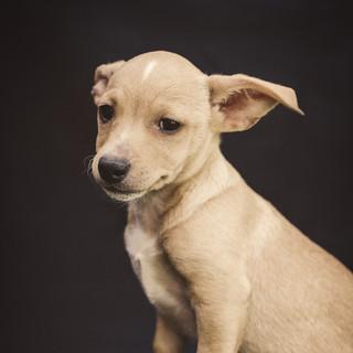 Pet photographer Tulare