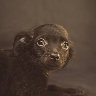 pet photographer in visalia