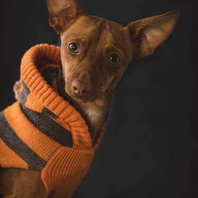 pet photographer visalia