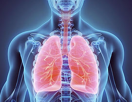 1200-6899-respiratory-system-photo1.jpg