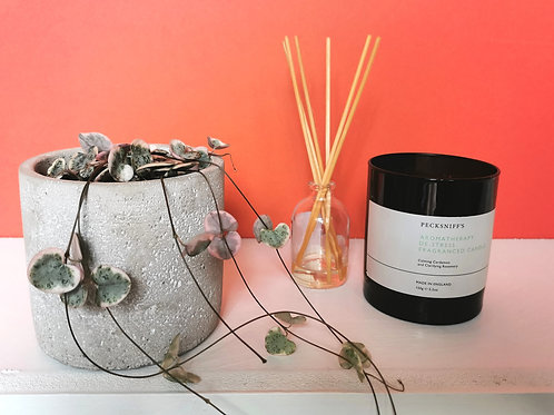 String of Hearts Plant with Concrete Pot