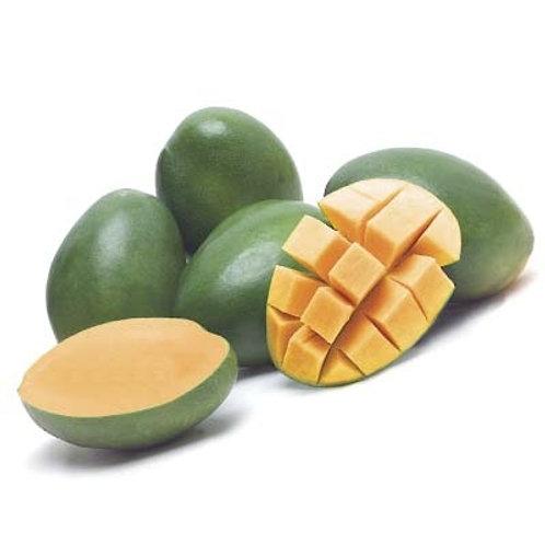 Keitt mango (Pile)