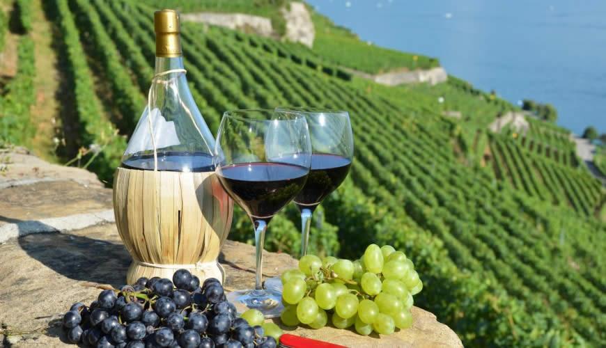 Wine tour1.jpg
