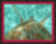 belize-turtle-framed-art-print.jpg