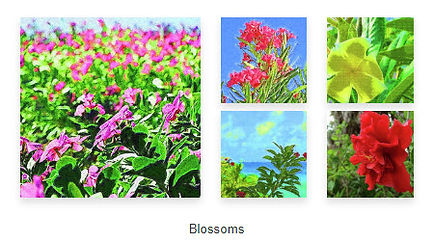Blossoms-Collection-Island-Hoppers-Art-b