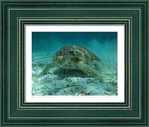 sea-turtle-framed-art.jpg