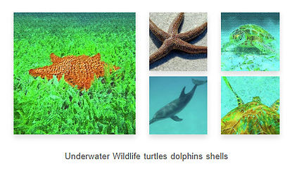 Underwater-Wildlife-Island-Hoppers-Art-b