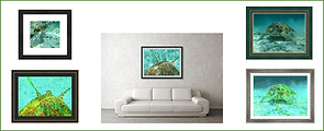 0-groupings-sea-turtle-art-collection-fo