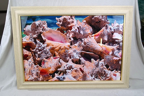 """""""Endless Conchs"""" Signed Framed Vivid Aluminum Limited-Edition Print"""
