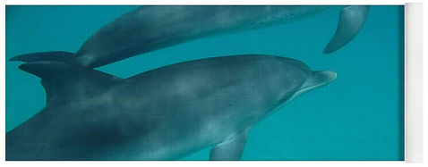 Bimini-Dolphins-Yoga-Mat-Island-Hoppers-