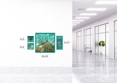 Sea-Turtle-Conservancy-wall-art-grouping