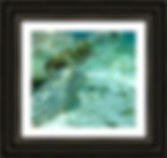 Close-Up-Green-Turtle-Belize-Framed-Prin