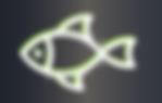 fwf abgetrennte Fische GRAUER BACK1.png