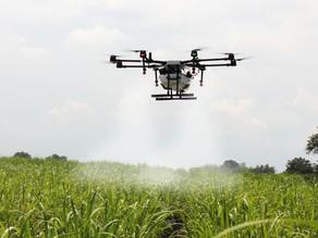 Equipos de DRONES se preparan para combatir una plaga de Langostas centroamericanas