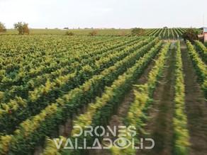 Importante aporte de los Drones a la Agricultura 3.0
