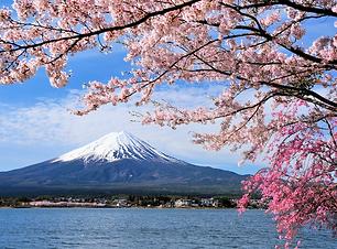 JAPONYA.png