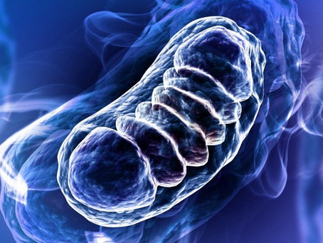Mitochondria can be repaired!