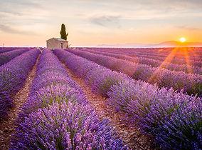 lavender-fields-shutterstock_320733584.j