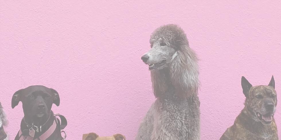 Coffee & Canines