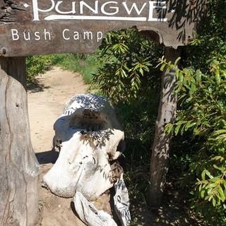 ZenGuiding Pungwe