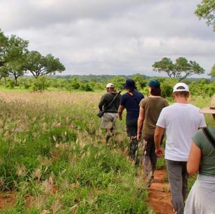 Zenguiding Walking Safari