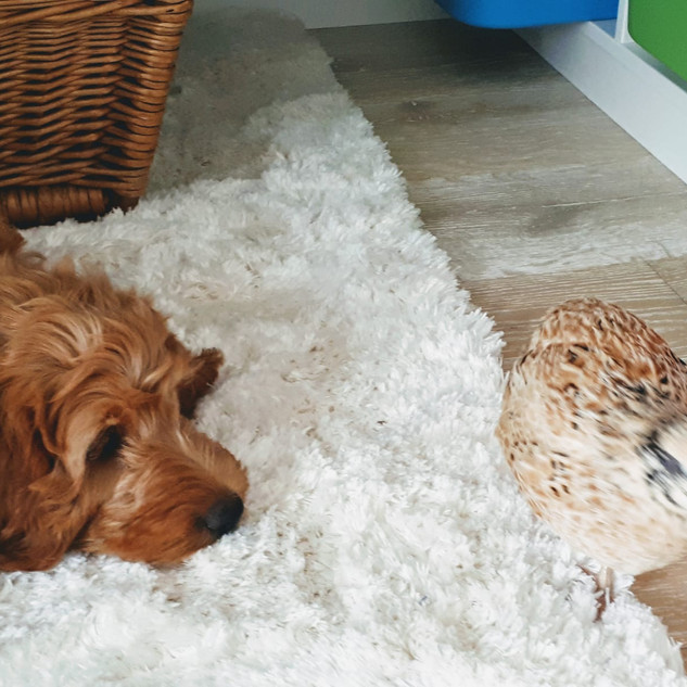 Kalle im entspannten Kontakt seiner neuen Familie
