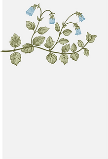 Botanik, Pflanze