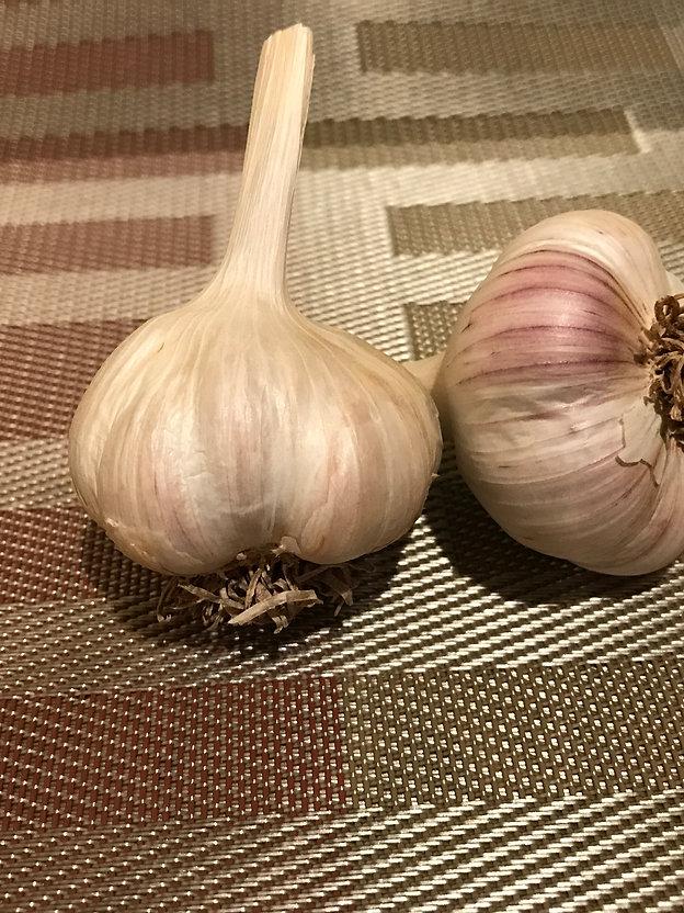 garlic on table