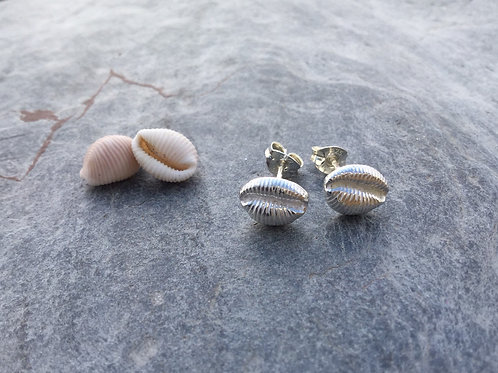 Cowrie Shell Studs