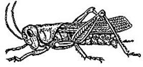 grasshopper_200px.jpg